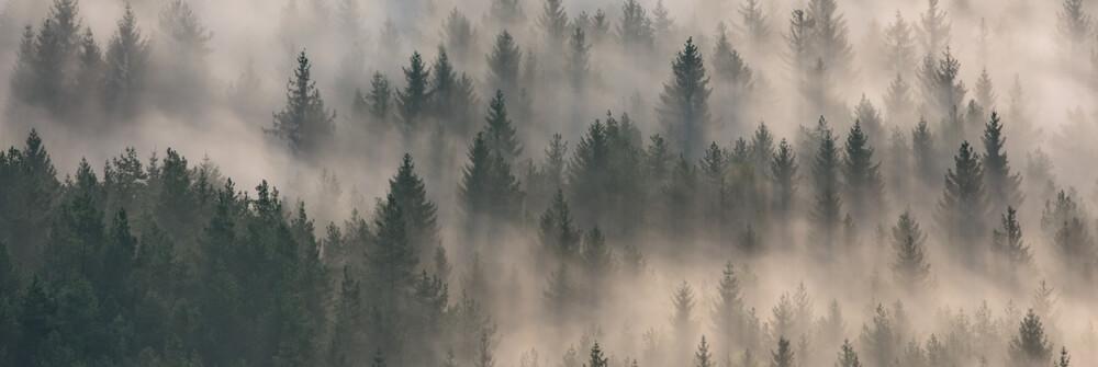 Wald Tapete