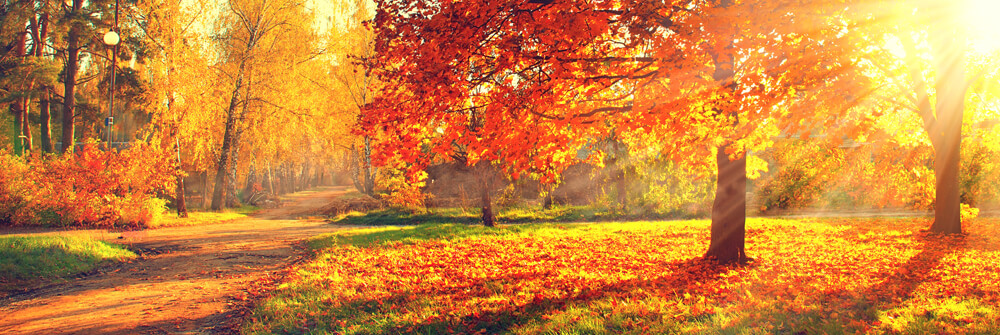 Fototapete mit Herbstlandschaften