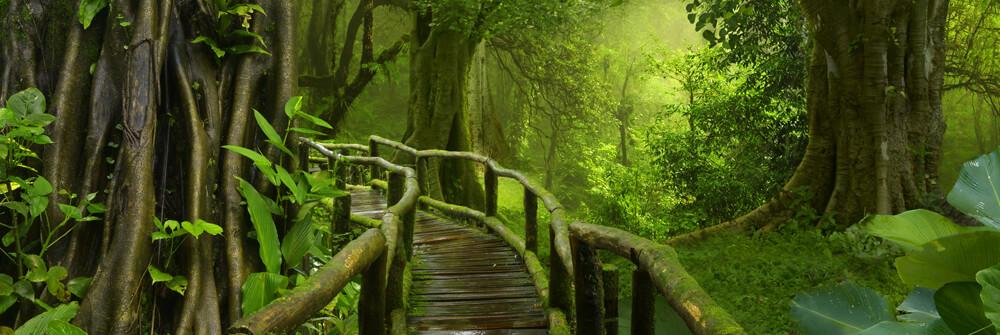 Fototapete Dschungel auf Maß gefertigt