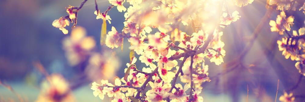 Frühlings-Tapeten