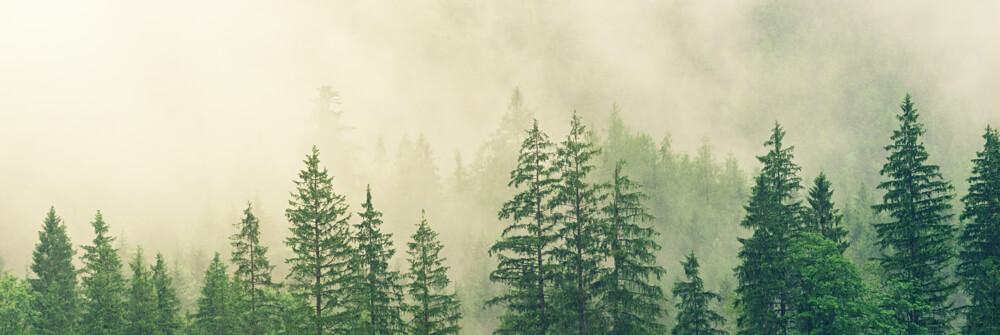 Tapete mit der Natur im Nebel