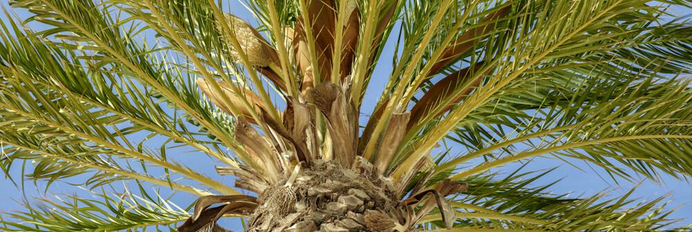 Tapeten mit Palmen