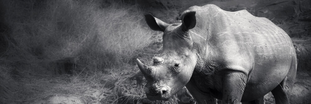 Fototapete Safaritiere