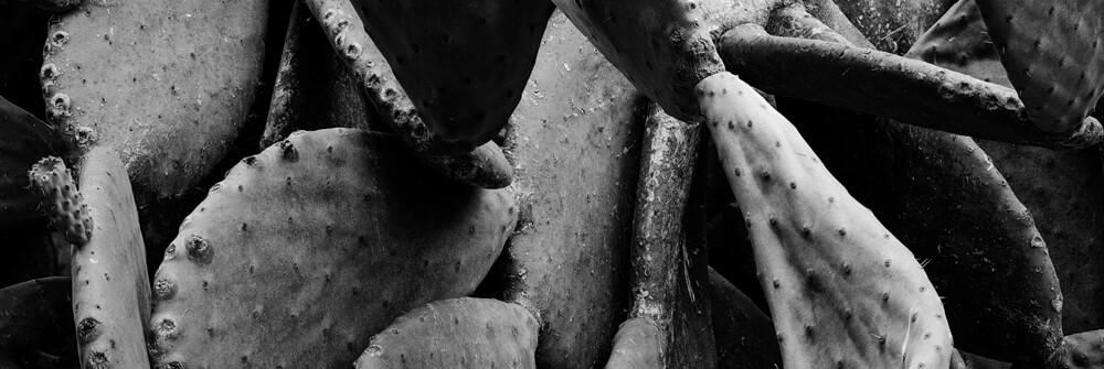 Fototapete in Schwarz und Weiß