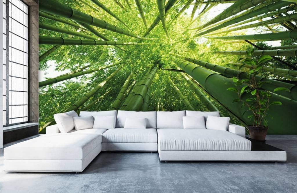 Wald Tapete - Bambus - Flur 1
