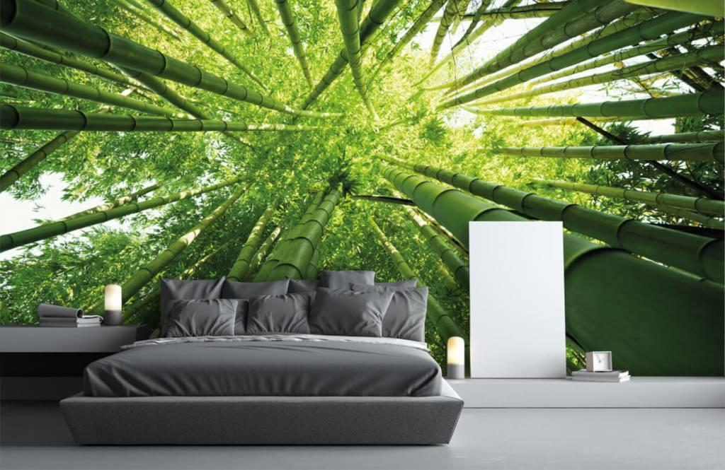 Wald Tapete - Bambus - Flur 3