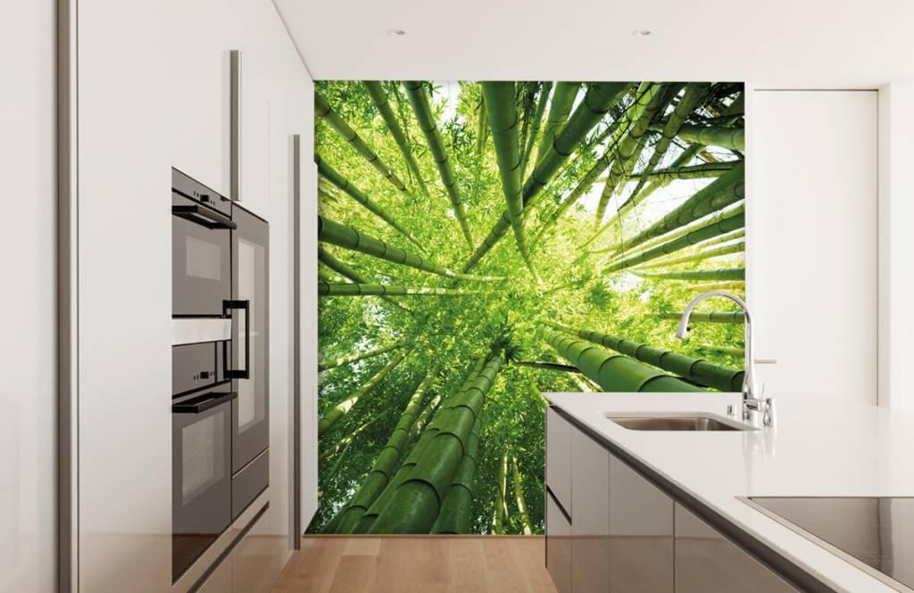 Wald Tapete - Bambus - Flur 4