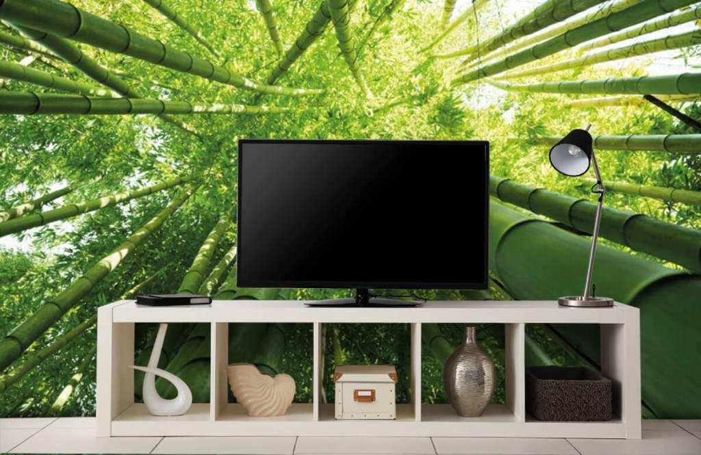 Wald Tapete - Bambus - Flur 5