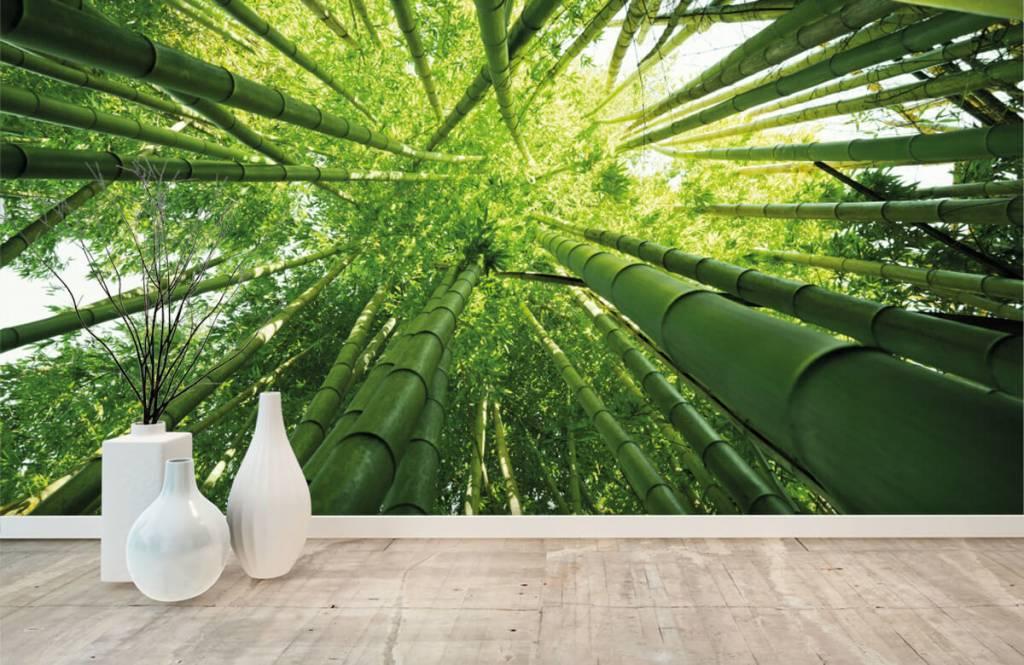 Wald Tapete - Bambus - Flur 8