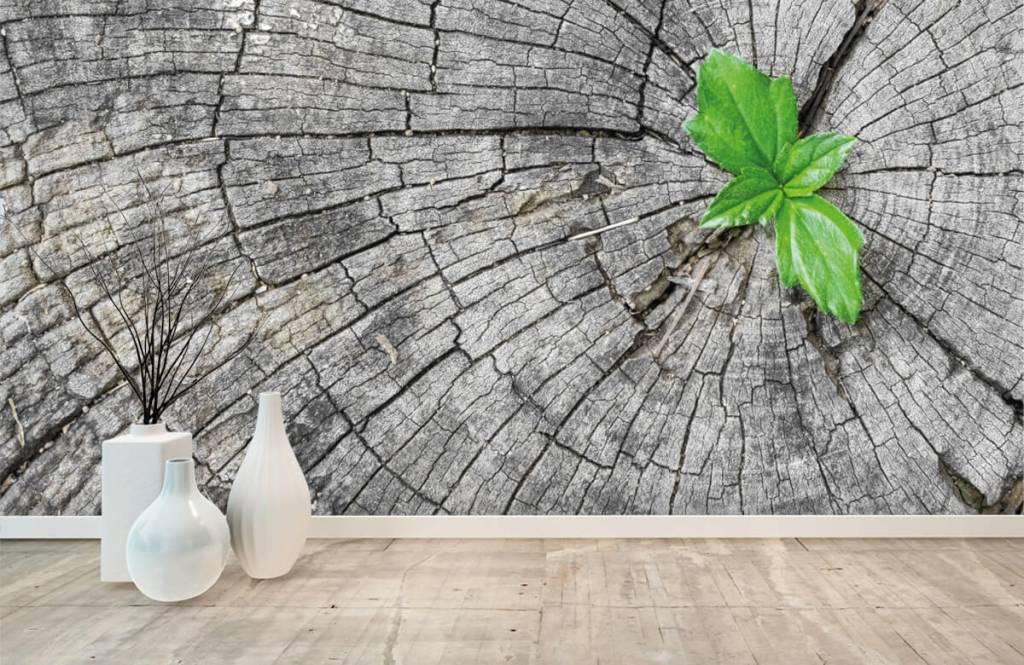 Holz Tapete - Baumstamm - Schlafzimmer 1
