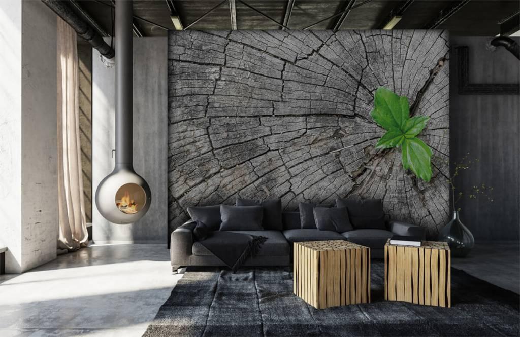 Holz Tapete - Baumstamm - Schlafzimmer 3