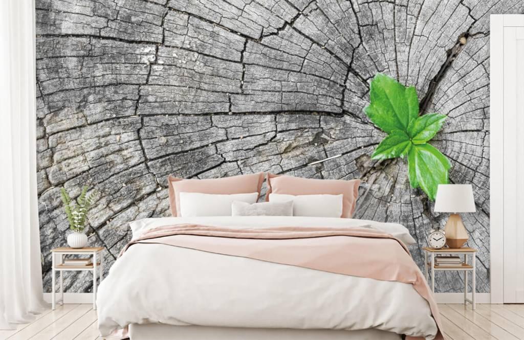 Holz Tapete - Baumstamm - Schlafzimmer 4