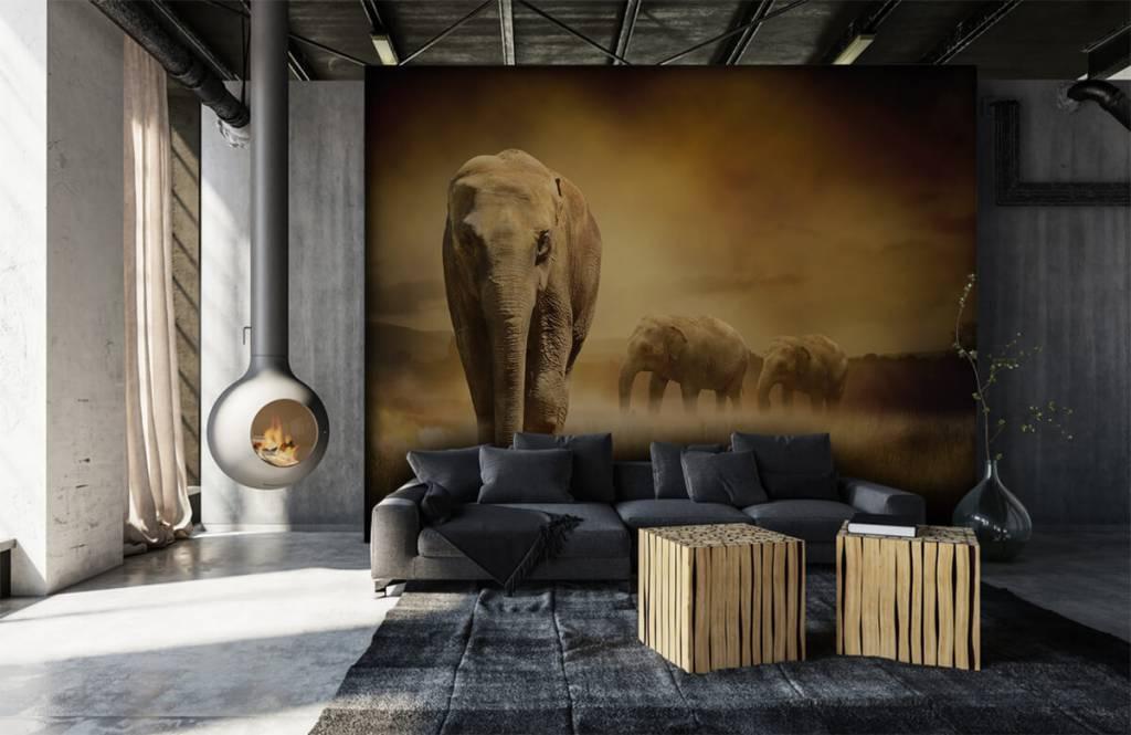 Animals - Drei Elefanten - Jugendzimmer 1