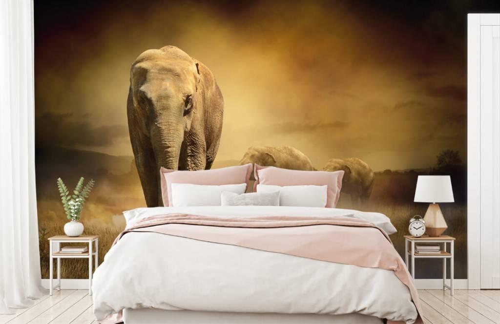 Animals - Drei Elefanten - Jugendzimmer 2
