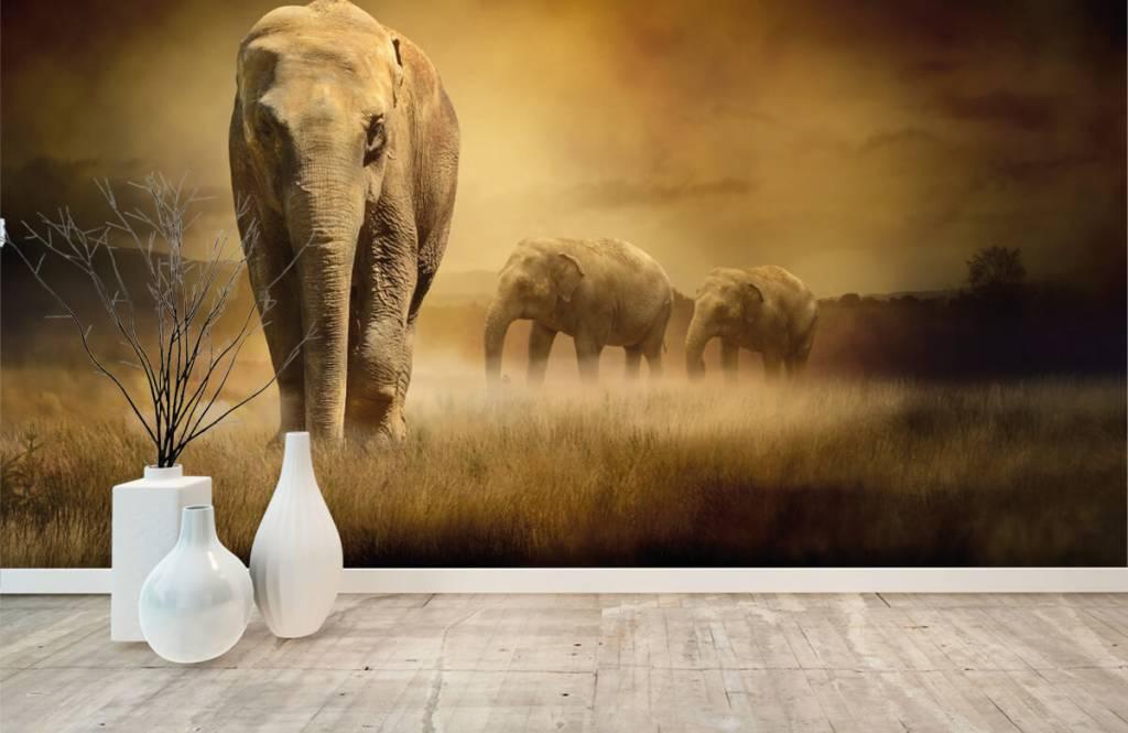 Animals - Drei Elefanten - Jugendzimmer 3