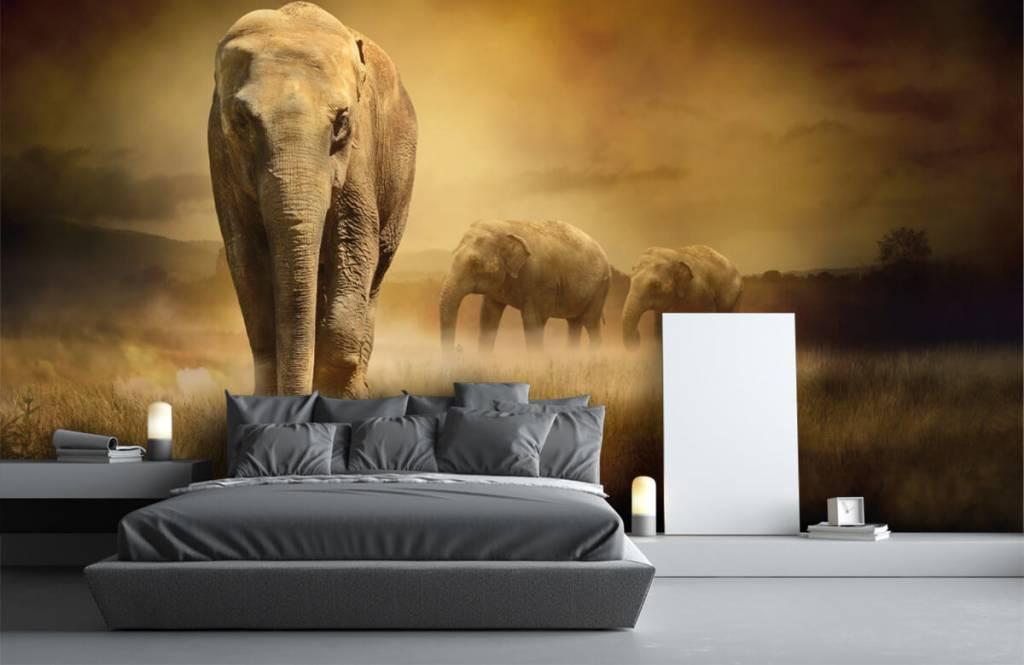 Animals - Drei Elefanten - Jugendzimmer 4