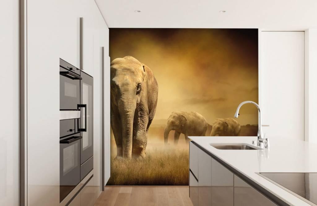 Animals - Drei Elefanten - Jugendzimmer 5