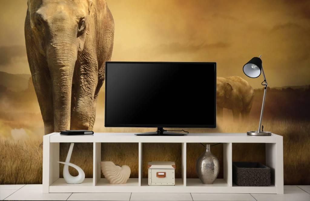Animals - Drei Elefanten - Jugendzimmer 6