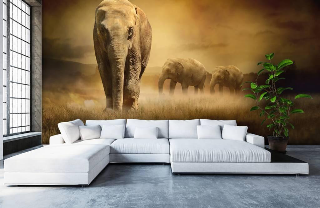 Animals - Drei Elefanten - Jugendzimmer 7