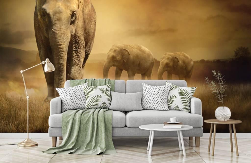 Animals - Drei Elefanten - Jugendzimmer 8
