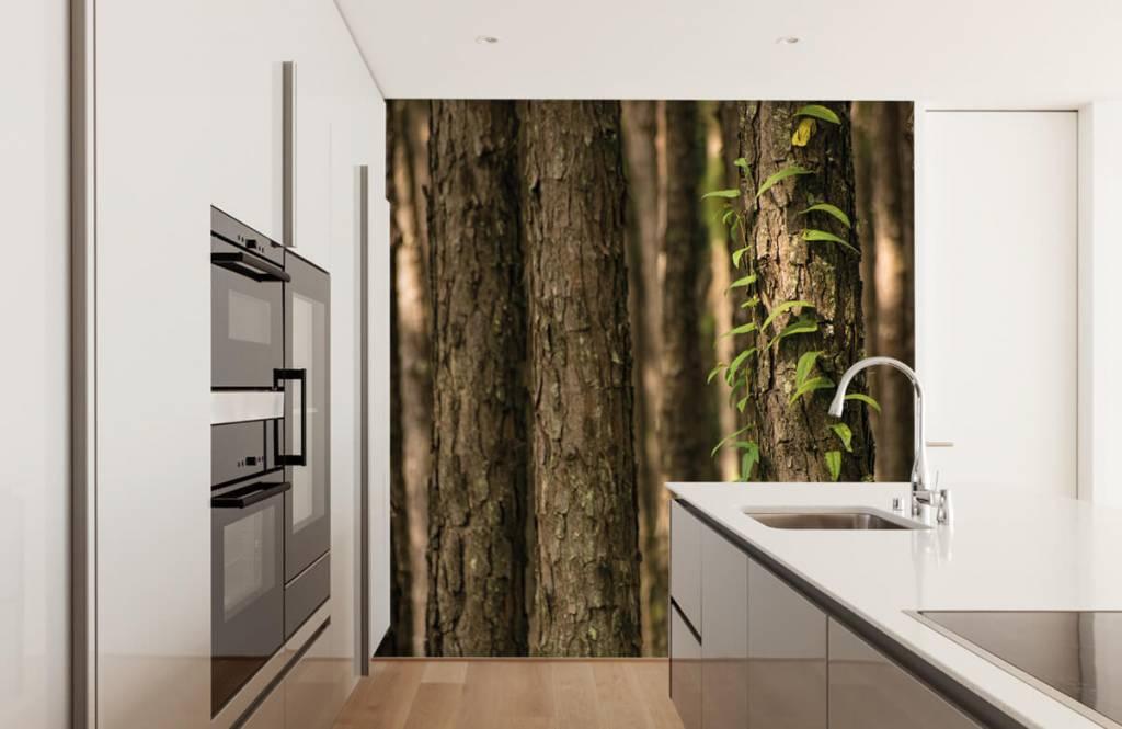 Wald Tapete - Stämme - Eingang 1