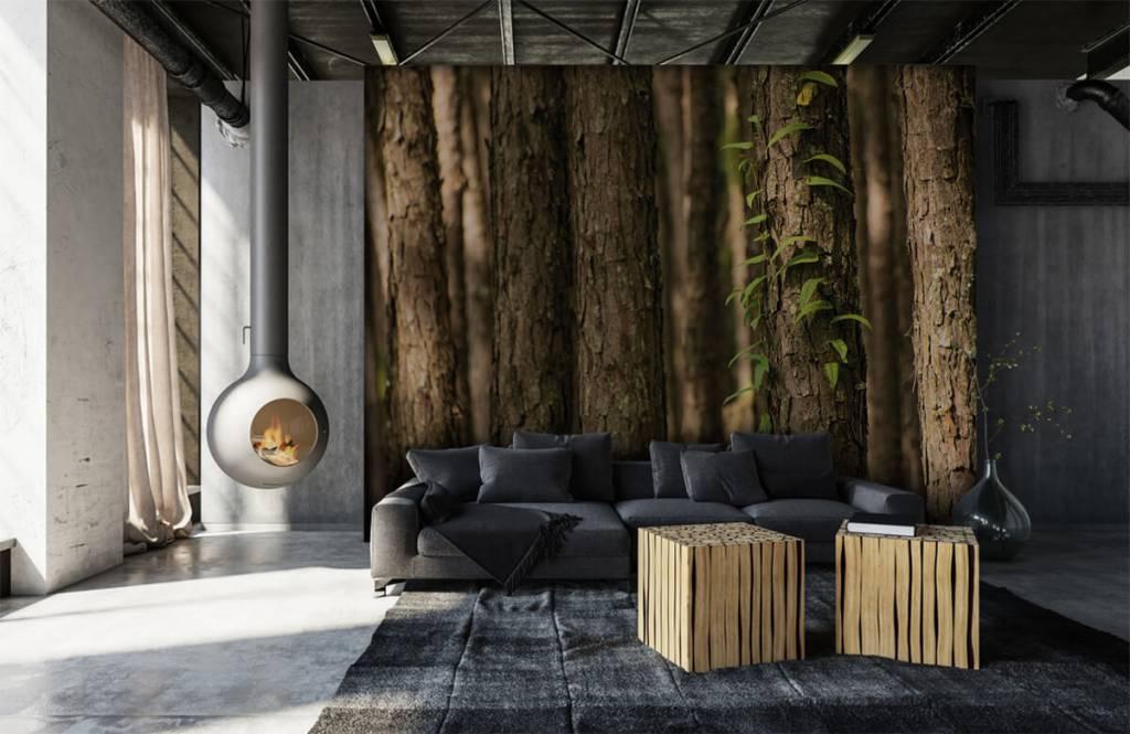Wald Tapete - Stämme - Eingang 6