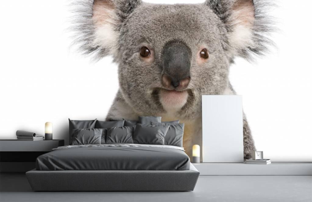 Andere - Koala - Kinderzimmer 1