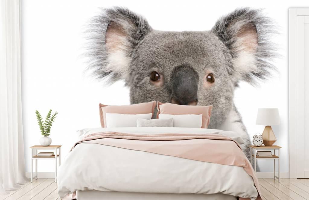 Andere - Koala - Kinderzimmer 2