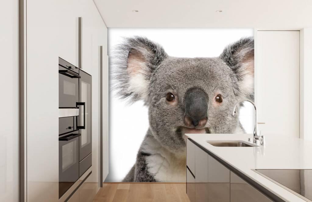 Andere - Koala - Kinderzimmer 3