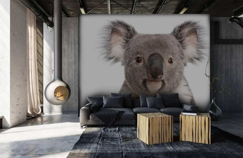 Andere - Koala - Kinderzimmer 6