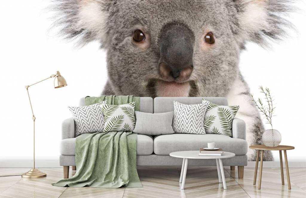Andere - Koala - Kinderzimmer 7