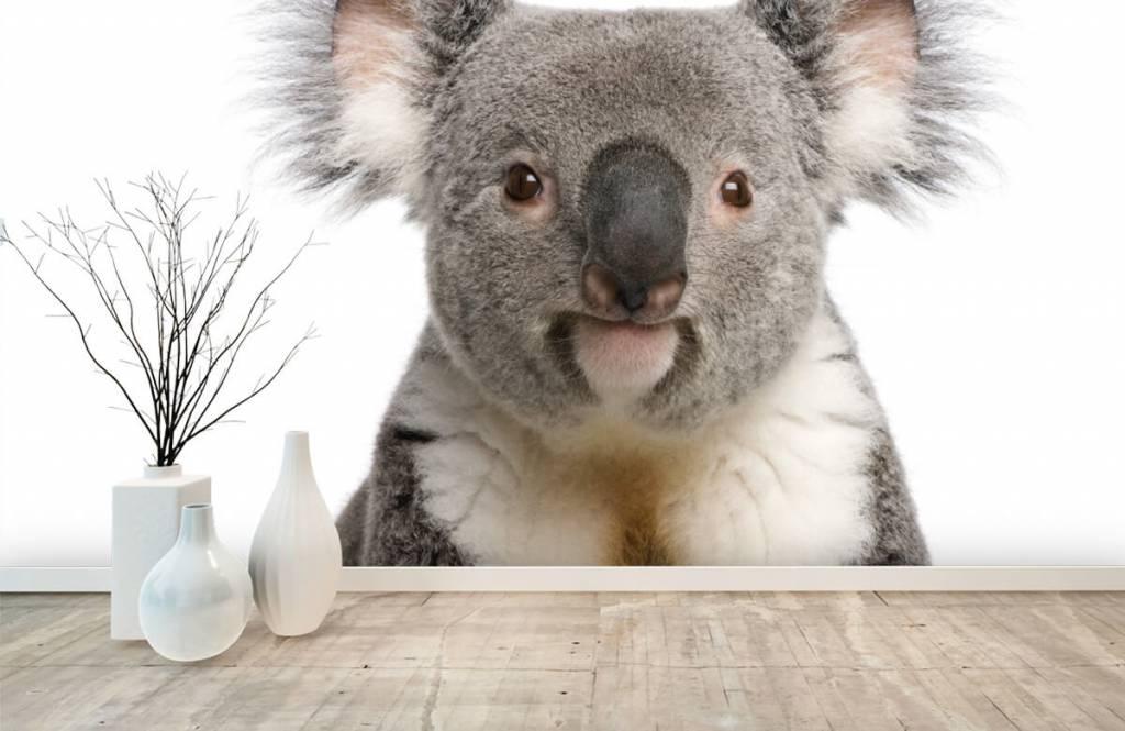 Andere - Koala - Kinderzimmer 8