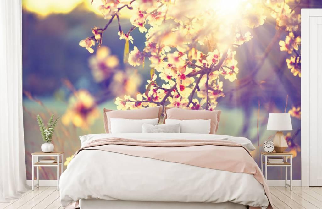Rosa Blüten - Blühender Baum - Schlafzimmer 2