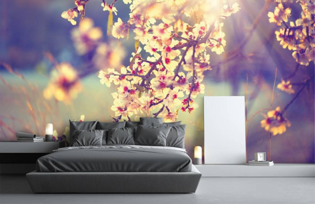 Rosa Blüten - Blühender Baum - Schlafzimmer 3