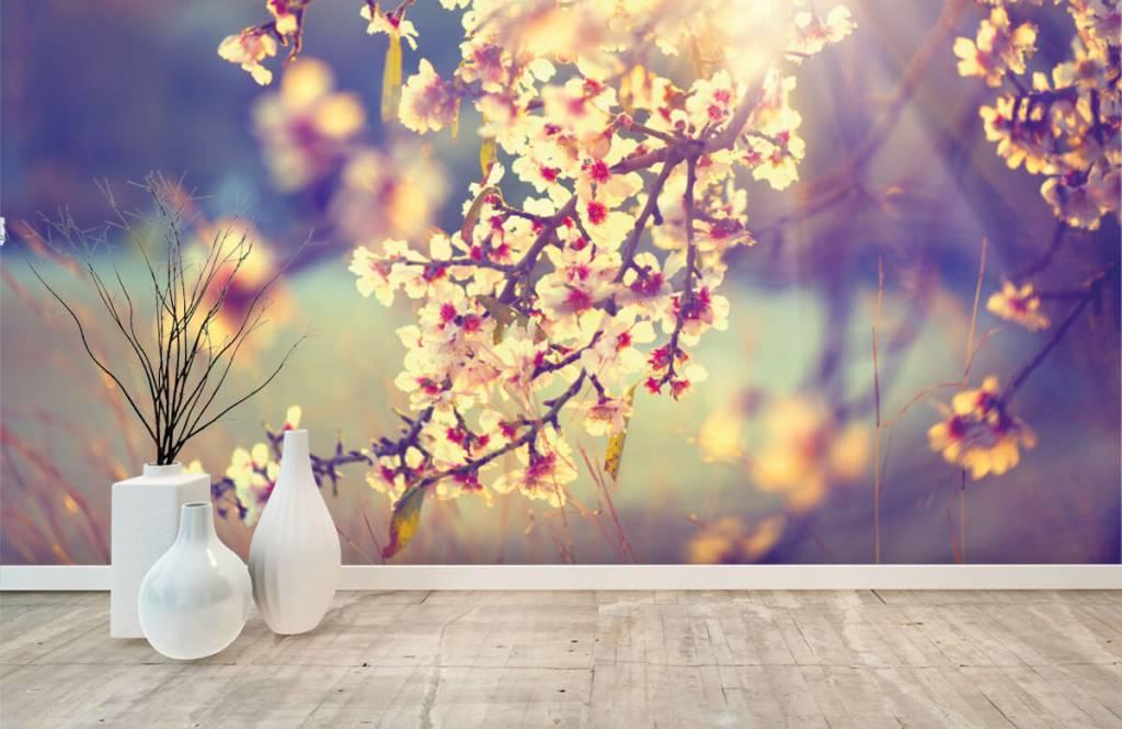 Rosa Blüten - Blühender Baum - Schlafzimmer 8