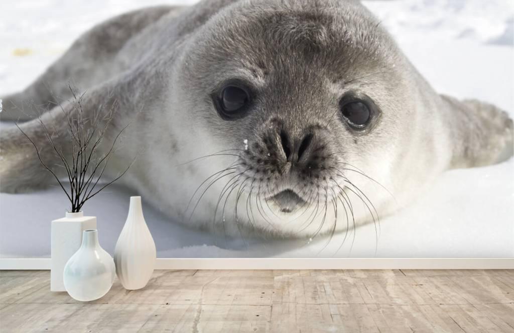 Kleinkinder - Seehund - Kinderzimmer 1