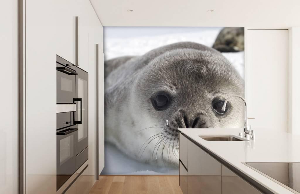Kleinkinder - Seehund - Kinderzimmer 3