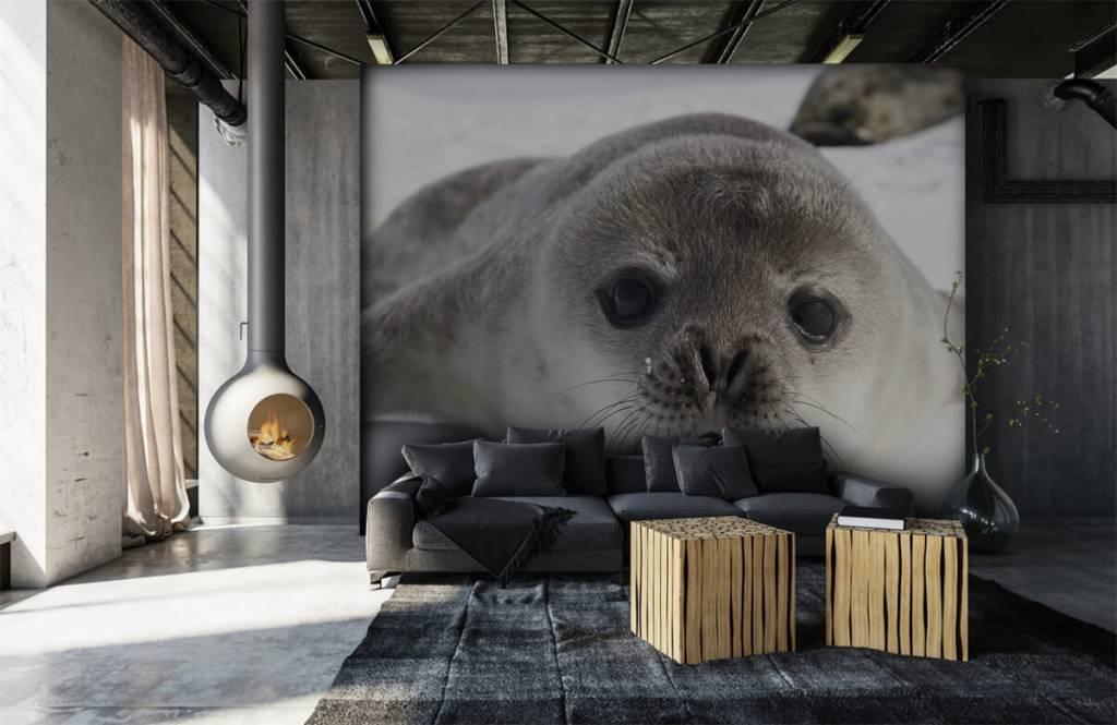 Kleinkinder - Seehund - Kinderzimmer 5