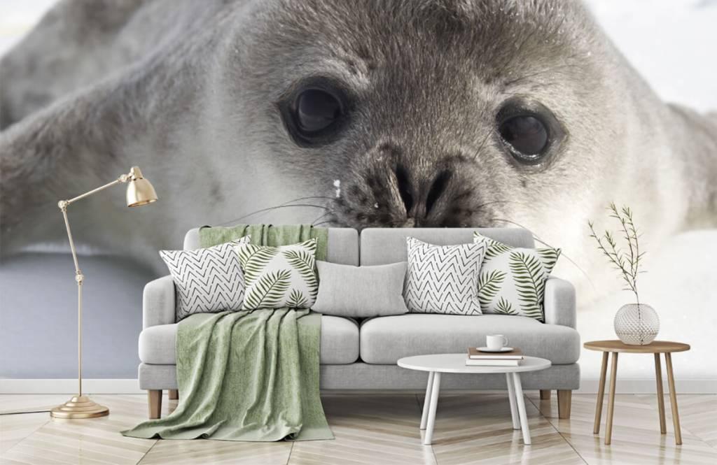 Kleinkinder - Seehund - Kinderzimmer 7