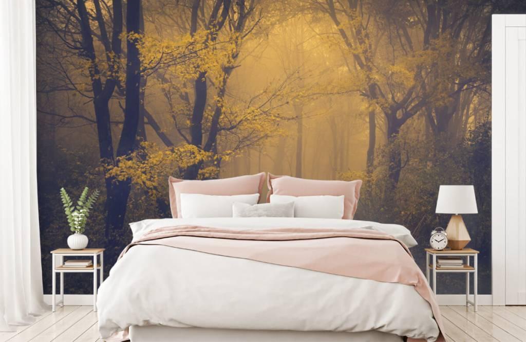 Wald Tapete - Dunkler Wald - Schlafzimmer 2