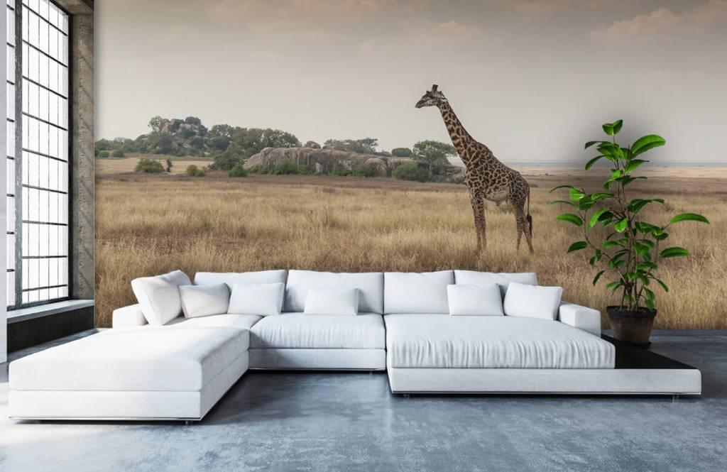 Tiere - Giraffe in der Savanne - Schlafzimmer 1