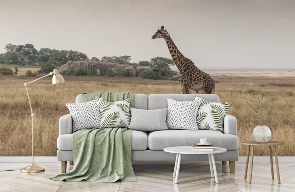 Tiere - Giraffe in der Savanne - Schlafzimmer 3