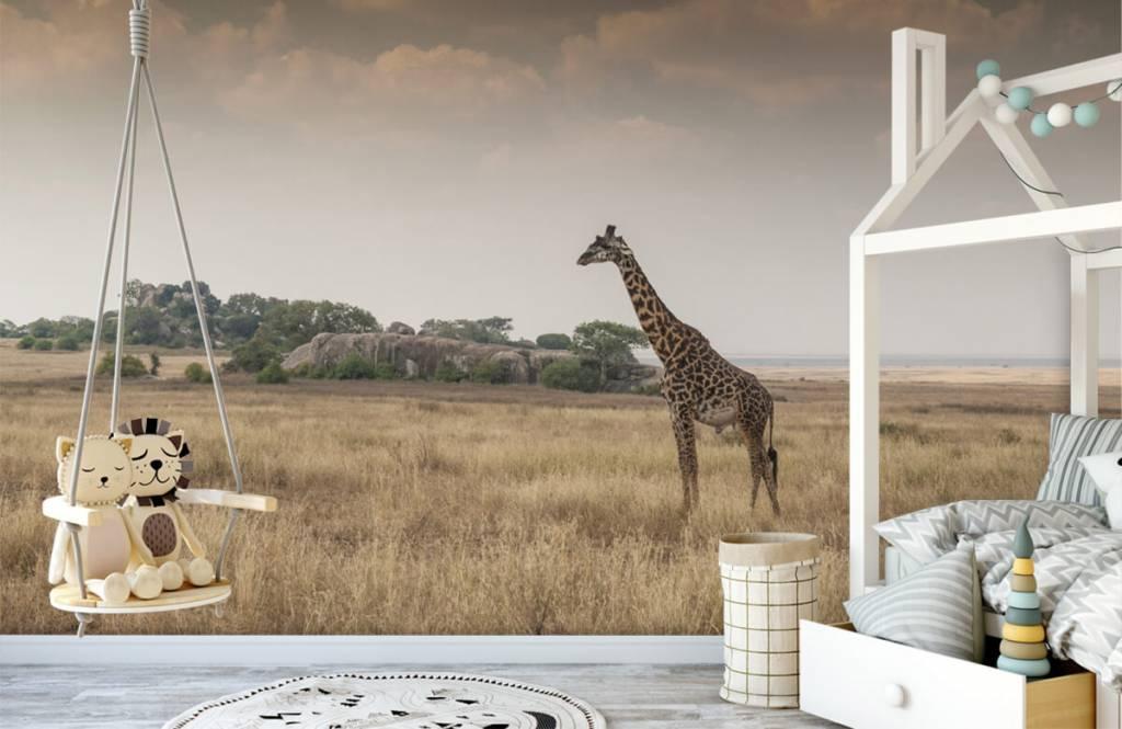 Tiere - Giraffe in der Savanne - Schlafzimmer 5