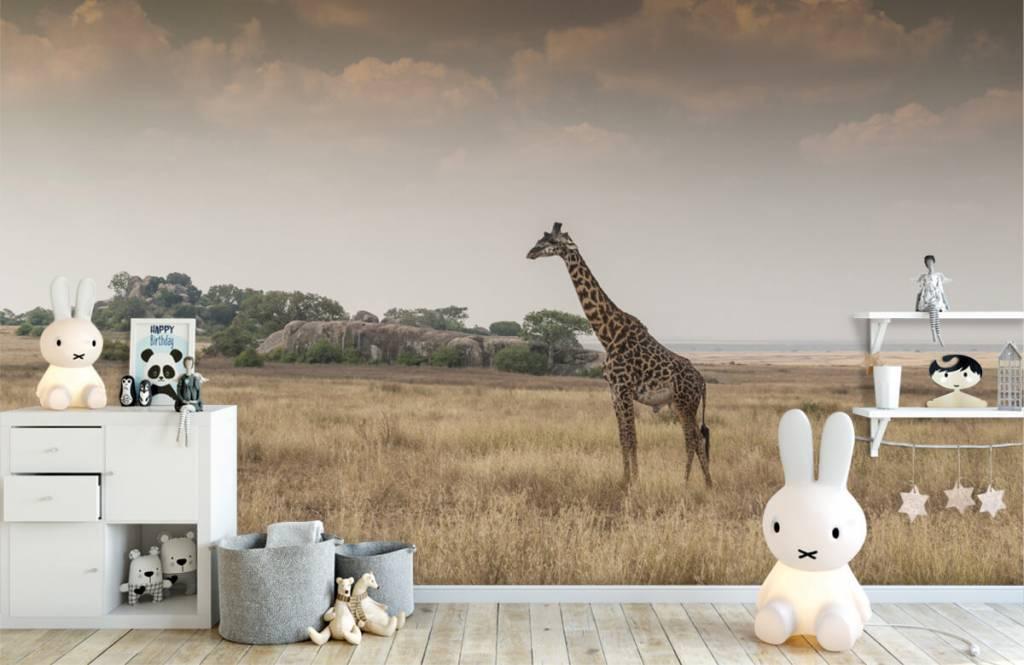Tiere - Giraffe in der Savanne - Schlafzimmer 6