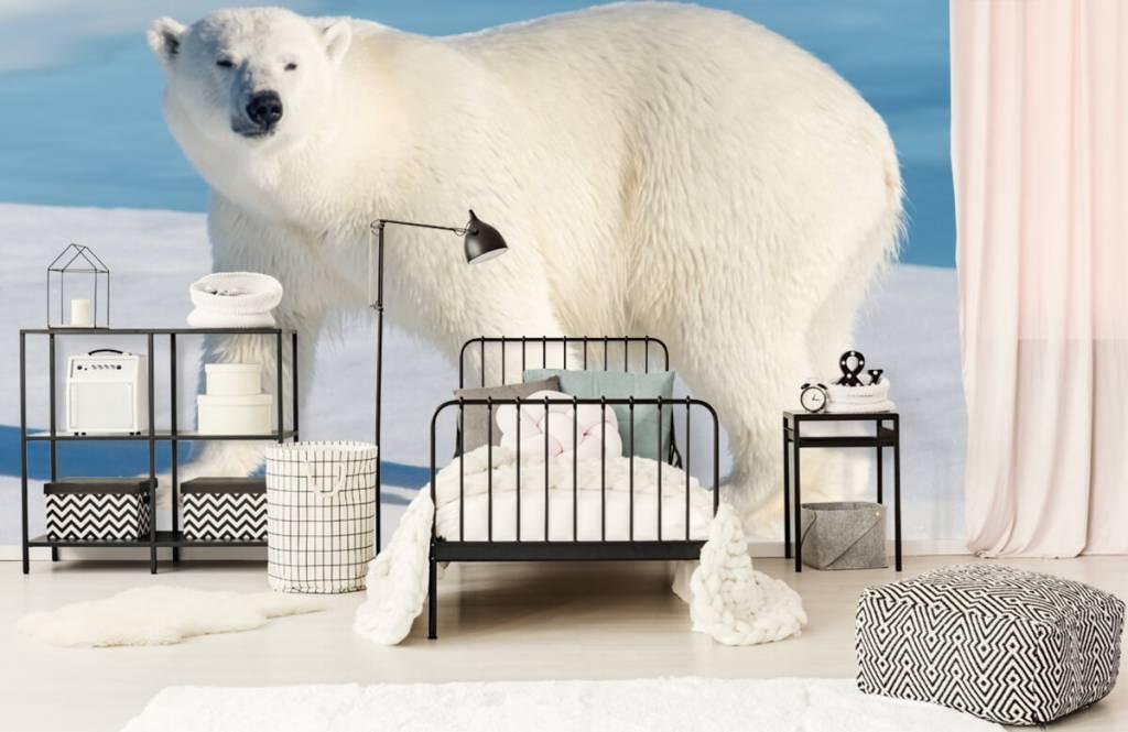 Andere - Eisbär - Kinderzimmer 1