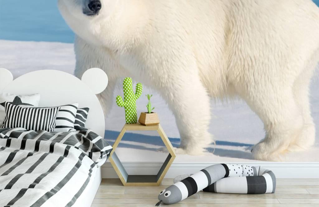 Andere - Eisbär - Kinderzimmer 2