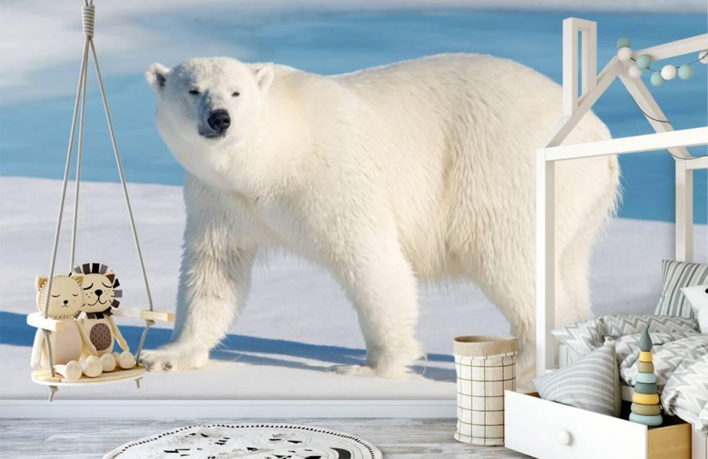 Andere - Eisbär - Kinderzimmer 3