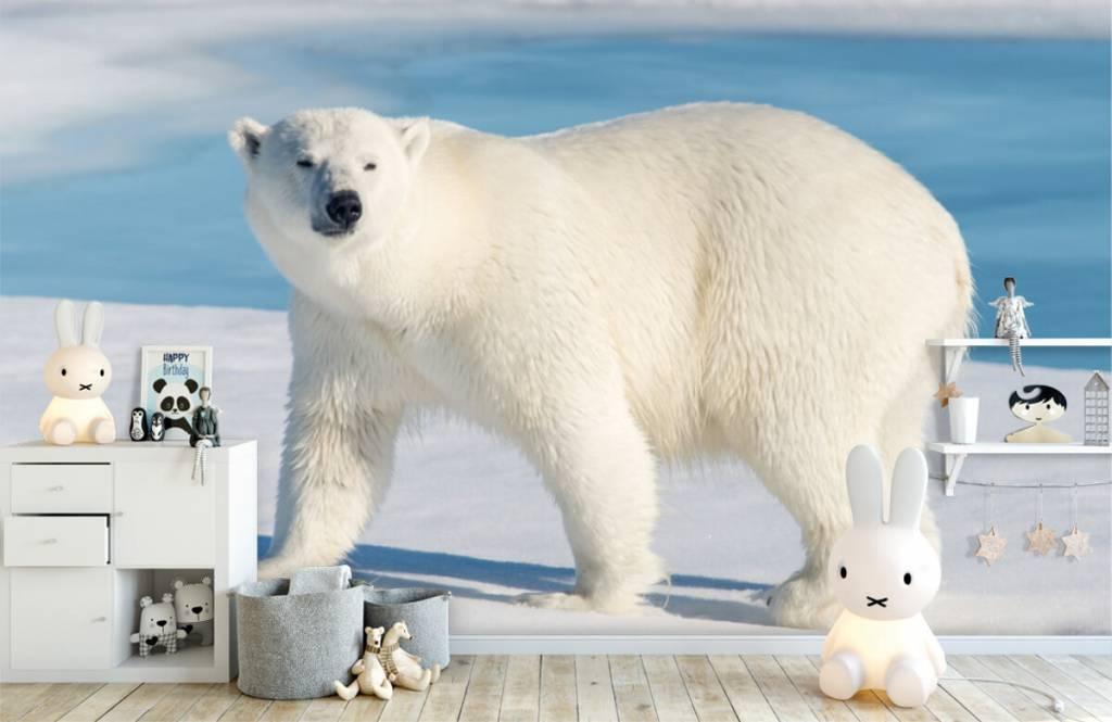 Andere - Eisbär - Kinderzimmer 4