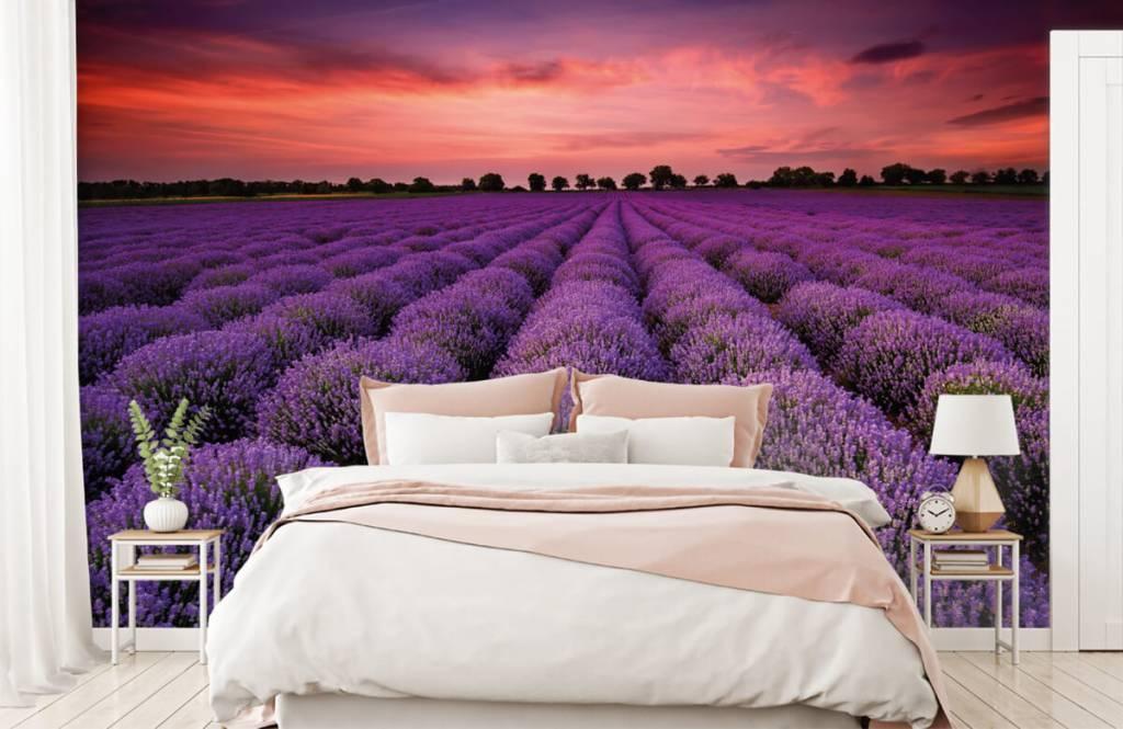 Blumenfelder - Lavendelfeld - Schlafzimmer 1