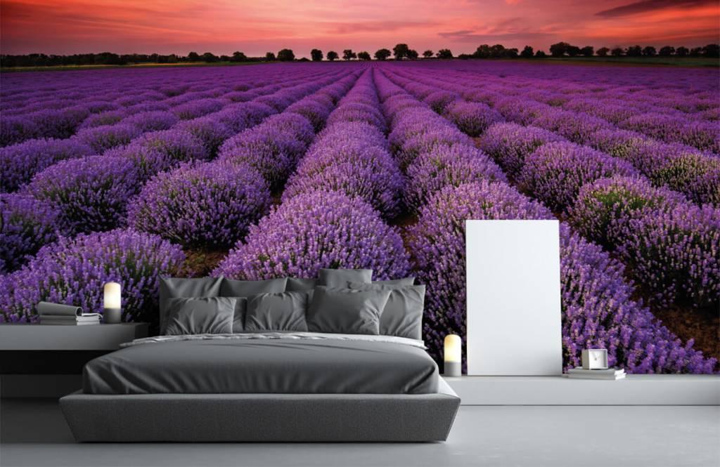 Blumenfelder - Lavendelfeld - Schlafzimmer 2